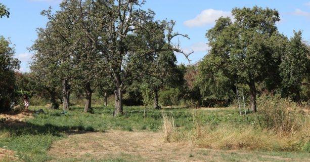 Aanplant-dag hoogstamfruitbomen