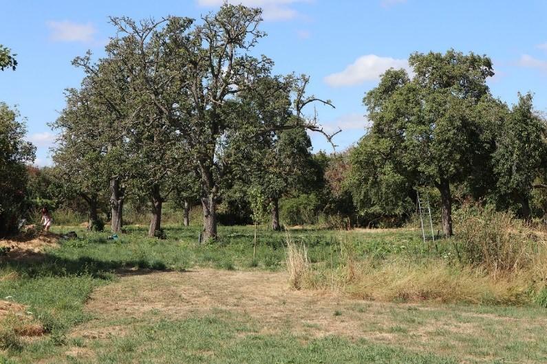 hoogstamfruitbomen